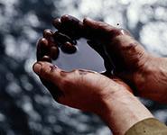 Новое месторождение нефти открыто в Гомельской области<br />