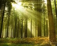 В Брестской области заложено 320 га энергетических плантаций