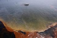 Глубоководные бактерии съели нефть в Мексиканском заливе<br />