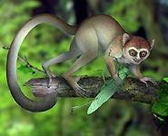 Ранние предки человека были меньше крысы и питались насекомыми - ученые<br />