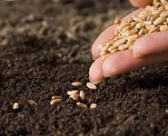 В Беларуси для повышения урожайности сельхозкультур семена планируют обрабатывать наночастицами<br />