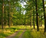 Экологи Беларуси, Молдовы, России и Украины обсуждают в Кишиневе вопросы защиты биоразнообразия