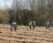 Сотрудники Белорусской АЭС во время Недели леса посадили около 24 тыс. сосен